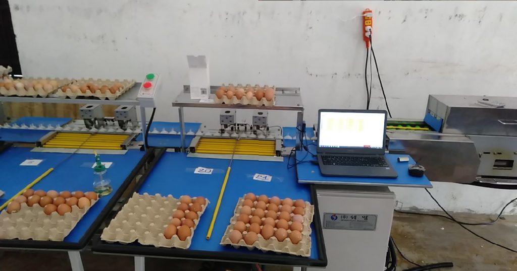 máy phân loại trứng 10,000 trứng/ giờ